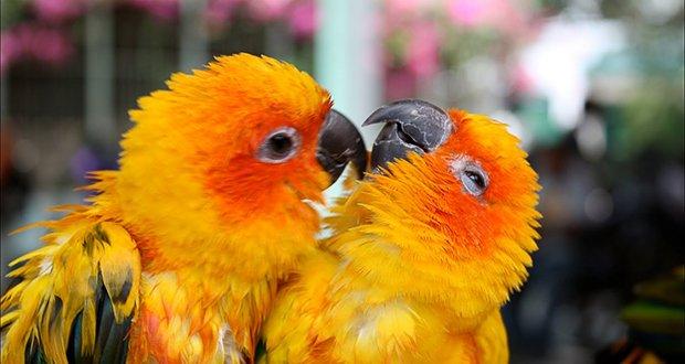 Birds - 1