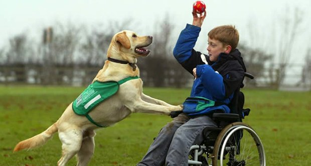 Types Of Service Dogs Canada