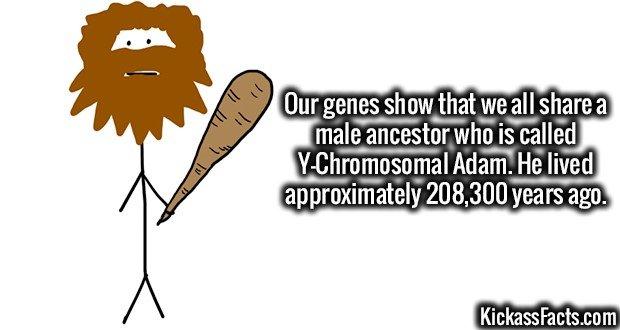 1828 Y-Chromosomal Adam
