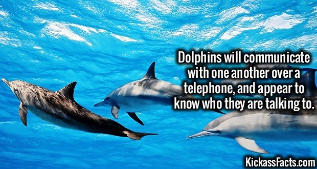 1837 Dolphins