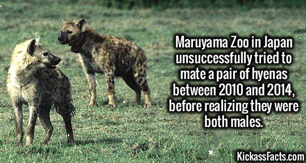 1840 Hyenas