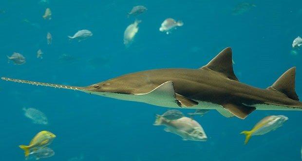 10 Kickass And Cool Shark Species Kickassfacts Com
