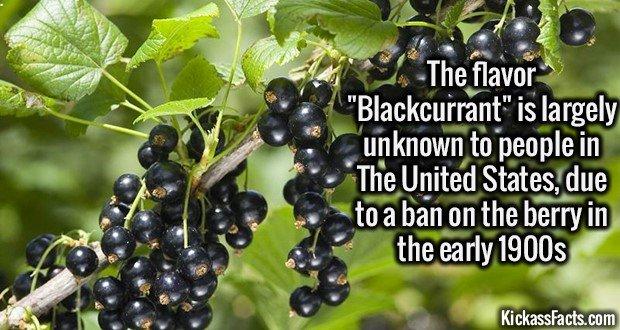 1873 Blackcurrant Flavour