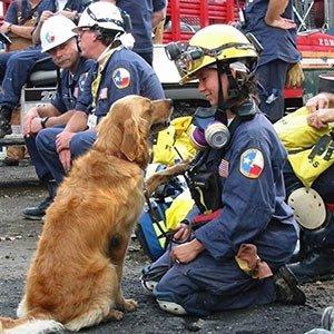 9-11 Rescue Dogs