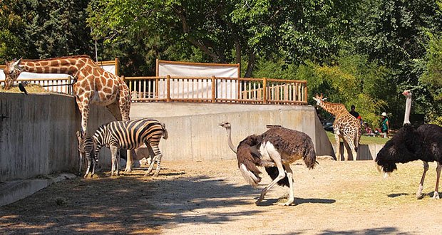 25 Kickass and Interesting Facts About Animal Zoos ...