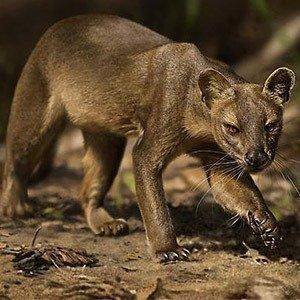 10 Lesser Known Animals | KickassFacts.com