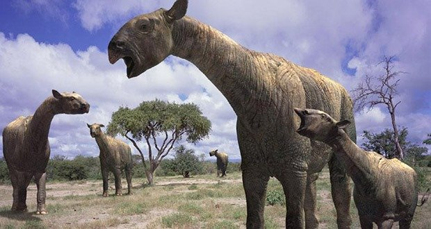 10 Giant Animals that lived after the Dinosaurs ...
