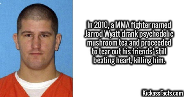 In 2010, a MMA fighter named Jarrod Wyatt drank psychedelic mushroom tea and proceeded to tear out his friends' still beating heart, killing him.