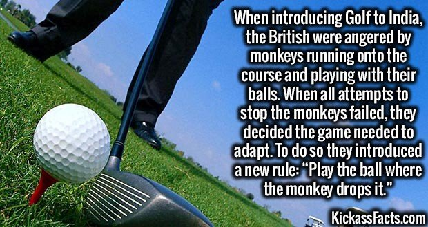 """2052 Golfing in India-When introducing Golf to India, the British were angered by monkeys running onto the course and playing with their balls. When all attempts to stop the monkeys failed, they decided the game needed to adapt. To do so they introduced a new rule: """"Play the ball where the monkey drops it."""""""