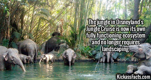 2085 Disneyland's Jungle Cruise-The jungle in Disneyland's Jungle Cruise is now its own fully functioning ecosystem and no longer requires landscaping.