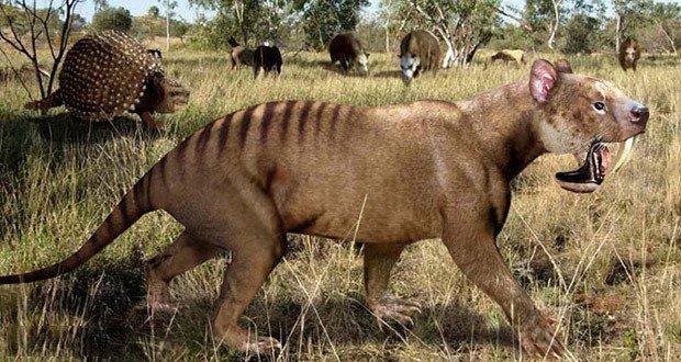 06. Thylacosmilus