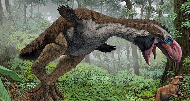 06 Dromornis