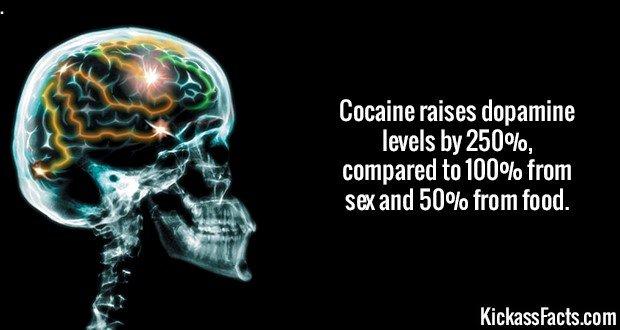 2150 Dopamine Levels-Scorpion venom is the most expensive liquid on earth at $38,858,507.46 per gallon far surpassing Thailand cobra venom which is $152,835.82 a gallon.