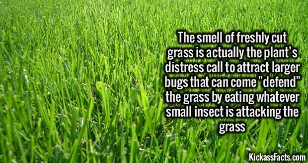 2200 Freshly cut grass-The smell of freshly cut grass is actually a plant distress call.