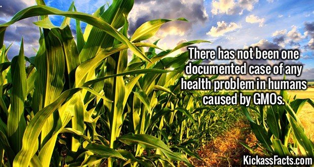 2229 GMO foods-There has not been one documented case of any health problem in humans caused by GMOs.