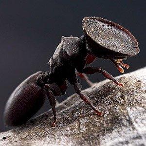 Ant door head