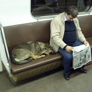 Moscow train dogs