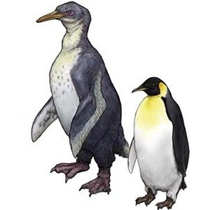 04 Largest Penguin