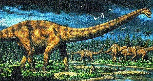 06 Largest Terrestrial Animal
