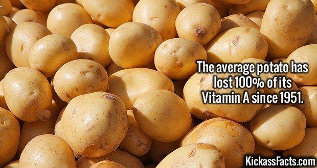 2566 Potatoes