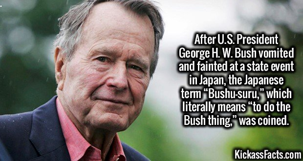 """2603 George H. W. Bush-After U.S. President George H. W. Bush vomited and fainted at a state event in Japan, the Japanese term """"Bushu-suru,"""" which literally means """"to do the Bush thing,"""" was coined."""