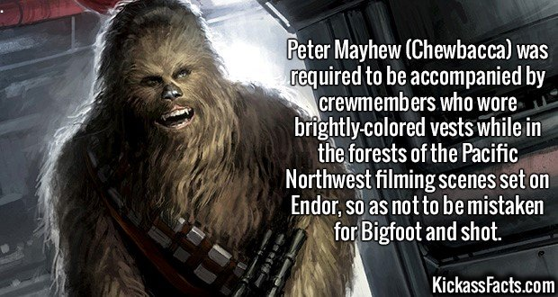 2609 Chewbacca-Peter Mayhew (Chewbacca) was required to be accompanied by crewmembers who wore brightly-colored vests while in the forests of the Pacific Northwest filming scenes set on Endor, so as not to be mistaken for Bigfoot and shot.