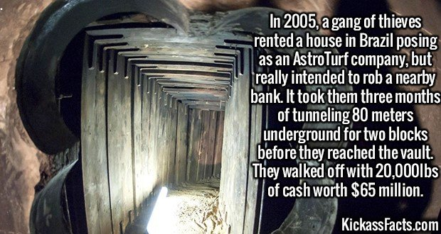 2377 Tunneling Robbers-In 2005, a gang of thieves rented a house in Brazil posing as an AstroTurf company, but really intended to rob a nearby bank. It took them three months of tunneling 80 meters underground for two blocks before they reached the vault. They walked off with 20,000lbs of cash worth $65 million.