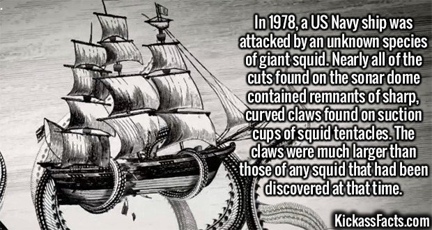 2385 Giant squid-In 1978, a US Navy ship was attacked by an unknown species of giant squid. Nearly all of the cuts found on the sonar dome contained remnants of sharp, curved claws found on suction cups of squid tentacles. The claws were much larger than those of any squid that had been discovered at that time.