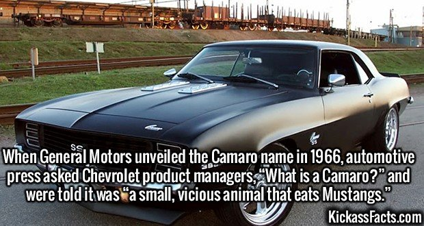 """2643 Camaro-When General Motors unveiled the Camaro name in 1966, automotive press asked Chevrolet product managers, """"What is a Camaro?"""" and were told it was """"a small, vicious animal that eats Mustangs."""""""