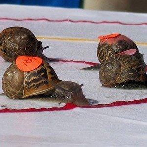 Congham snail race