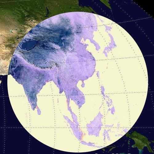 Density Map- Focused