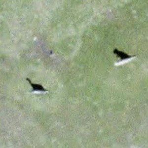 Dinosaurs from above