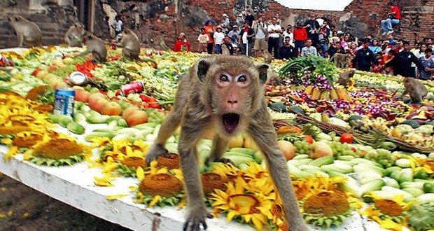 01. Monkey Buffet Festival Thailand