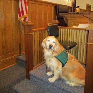 03. Courtroom service dog