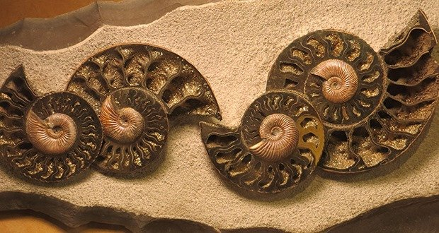 08. Pyritized ammonite