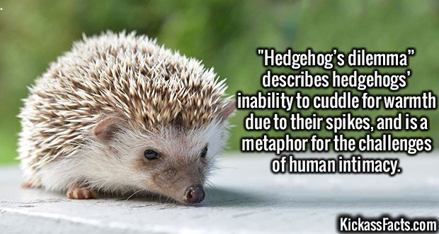 2492 Hedgehog Dilemma-