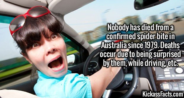 2554 Spider Deaths-Nobody has died from a confirmed spider bite in Australia since 1979. Deaths occur due to being surprised by them, while driving, etc.