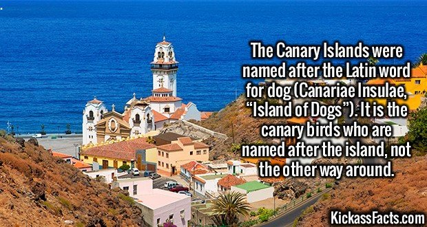 "2570 Canary Islands-The Canary Islands were named after the Latin word for dog (Canariae Insulae, ""Island of Dogs""). It is the canary birds who are named after the island, not the other way around."