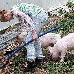Raise piglets