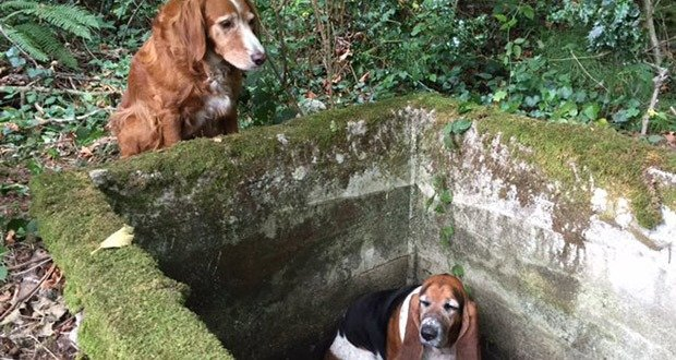 05. Dog Stands Guard By Trapped Best Friend for a Week Until Rescued