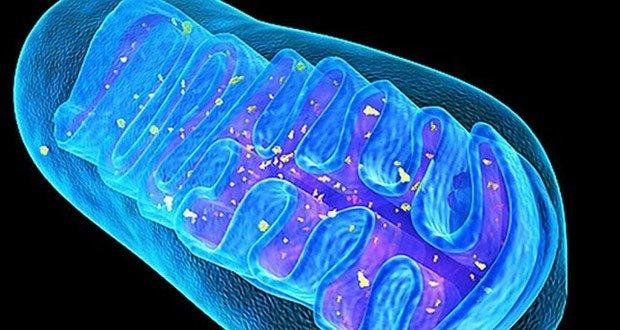 06. Mitochondria