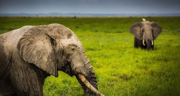 06. United States and China End Commercial Ivory Sales