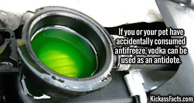 2616 Antifreeze-If you or your pet have accidentally consumed antifreeze, vodka can be used as an antidote.