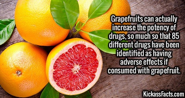 2644 Grapefruits Meds-Grapefruits can actually increase the potency of drugs, so much so that 85 different drugs have been identified as having adverse effects if consumed with grapefruit.