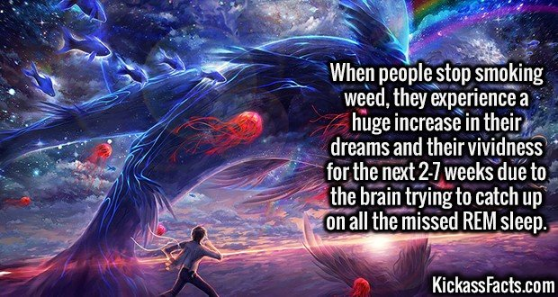 2684 Vivid Dreams-When people stop smoking weed, they experience a huge increase in their dreams and their vividness for the next 2-7 weeks due to the brain trying to catch up on all the missed REM sleep.