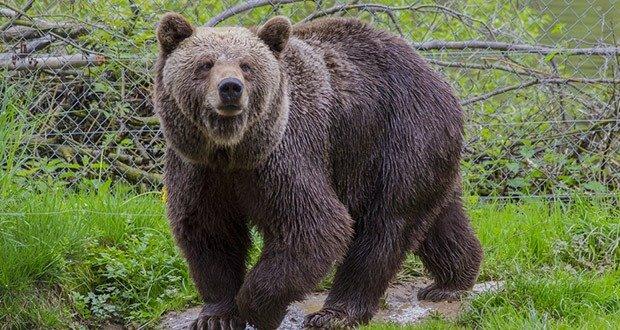 Avoid Bear Attack