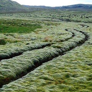 Iceland Tracks
