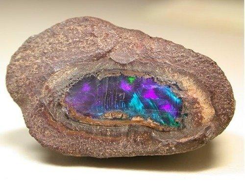 Opal 6
