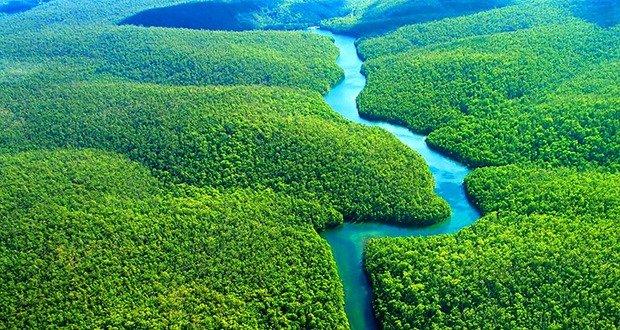02. Amazon Deforestation plummeted 80%