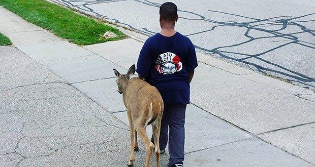 06. Boy Helps Blind Deer Find Food